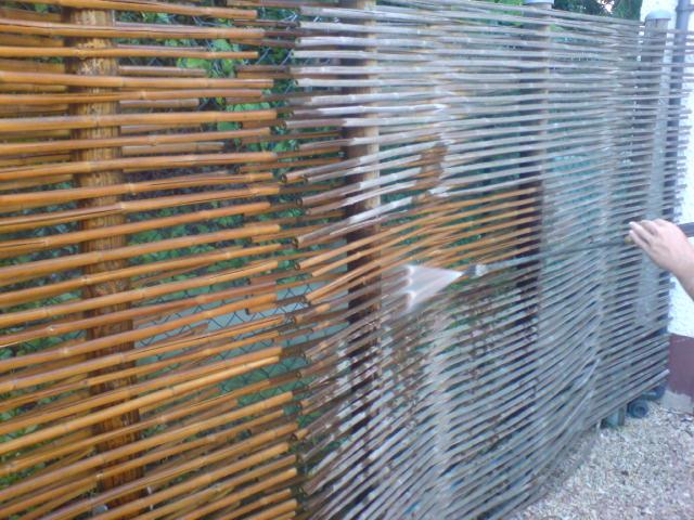 Bambus Pflege - Bambusstangen - Tonkinstab